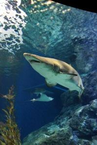 ฉลามมากี่ทีก็อ้วนท้วน