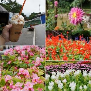 กาปฟแมคคาดาเมียที่ใส่ถั่วเยอะแต่ไม่มีกลิ่นเลย และดอกไม้ในสวน