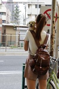 """ชอบกฎหมายเกี่ยวกับการเลี้ยงสุนัขของญี่ปุ่น อารมณ์ประมาณ """"ถ้าไม่มีความรับผิดชอบ ห้ามเลี้ยง"""" เมืองสะอาดคนมีระเบียบ แต่ใช้ในไทยไม่ได้แน่นอน สิทธิแต่ละคนมันสูงเหลือเกิน แปรผกผันกับความมีระเบียบและความรับผิดชอบจริงๆ"""