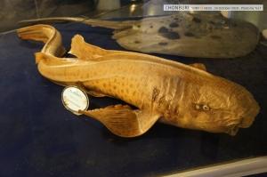ที่จริงมีโซนปลาใต้ทะเลลึกด้วย แต่สงสัยลืมถ่ายมา (พวกปลาแองเกอร์ที่หัวมีหลอดไฟ)