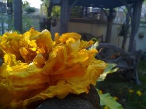 ลองมาโครมั่งเห็นในเวบชอบถ่ายดอกไม้มาอวดกัน
