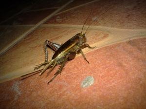 ลองแมลงโดยแฟลชกลางคืนมั่ง