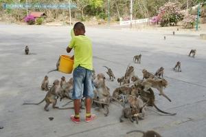 ซื้ออาหาร แต่ลิงเพชรบุรีรู้สึกว่ามันดุ เลยให้เด็กปจัดการเลย