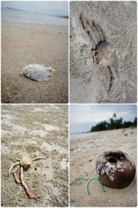 ที่หาดนี้จะมีซากสัตว์น้ำมาตายมากมาย นอกจากนี้ยังมีหอยหลอดกับปูลมวิ่งเยอะเป็นธรรมชาติดี
