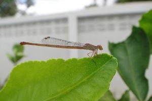 ห่างหายไปนานขอถ่ายแมลงนิดนึง คราวนี้ตั้งความละเอียดเต็ม