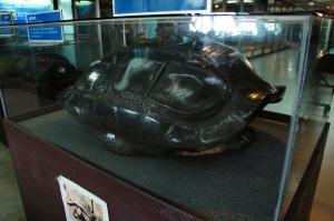กระดองเต่ายักษ์ตีนช้าง (เต่ากาลาปากอส)