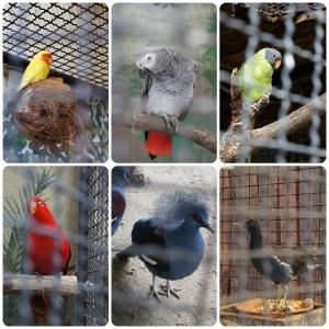 นกทั้งหลายสีสวยมากมาย