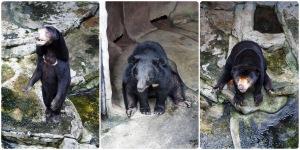 หมีควาย และหมีหมา