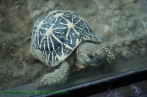 เต่าดาว