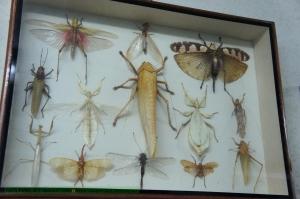 แมลงต่างๆ
