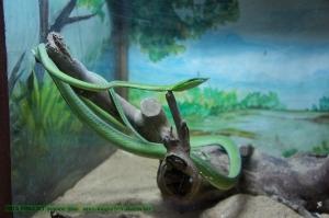 งูเขียวปากจิ้งจก