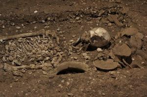 กระดูกจากแหล่งโบราณคดีหนองโน