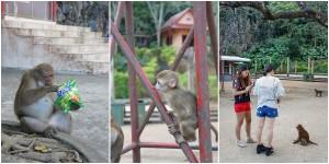 ลิงในบริเวณเยอะมาก
