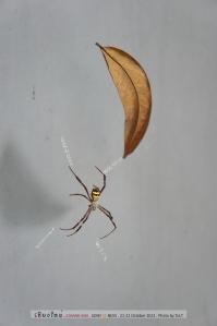 แมงมุมเฝ้าห้องน้ำ