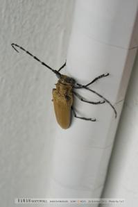 แมลงหน้าแปลกแถวที่พัก